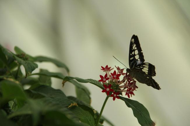 kelebeklervadisi16